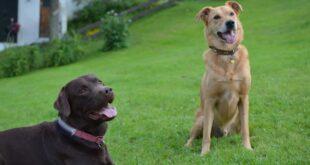 Mit Reico Hundefutter Haushaltskasse aufbessern